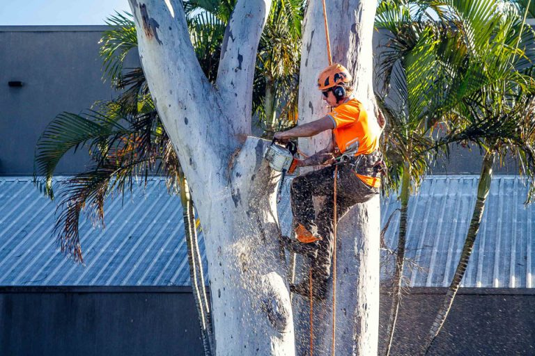 Tree Removal Geelong